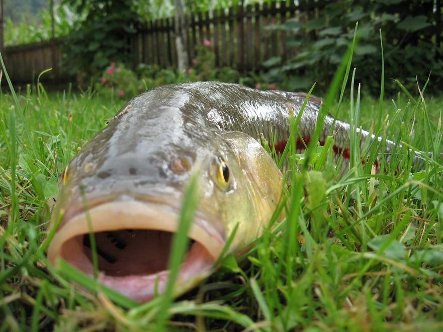 ribolov u sokobanji